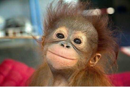 cute baby monkey meme template 1
