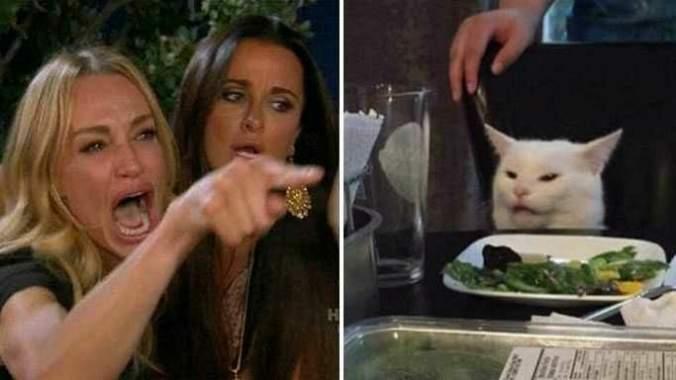 lady yelling at cat viral meme
