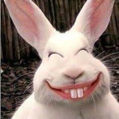 smiling rabbit meme template