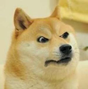 doge angry meme template