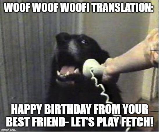 happy birthday message for friend dog