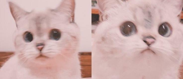cute cat surprised look