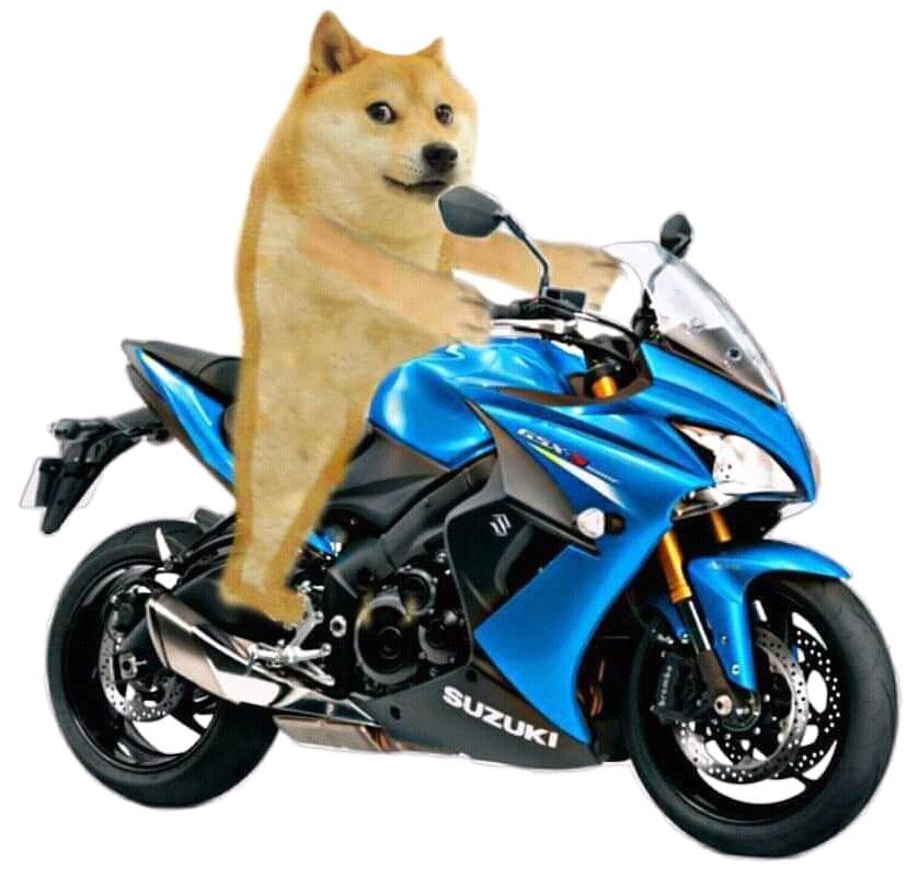 doge on bike meme template